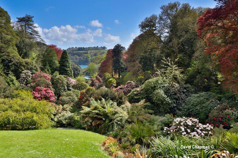 Trebah Gardens Near Falmouth Great British Gardens