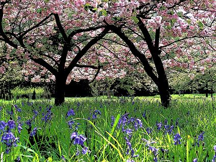 Westonbirt Arboretum Near Tetbury Best Times To Visit