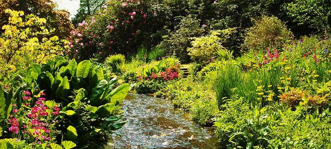 Gardens To Visit Dorset Near Dorchester Weymouth
