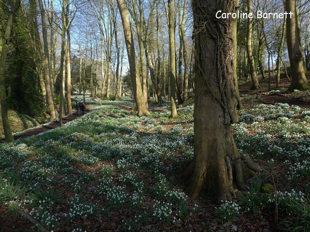 where-to-see-snowdrops